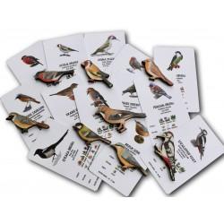 Poznáváme přírodu - ptáčci