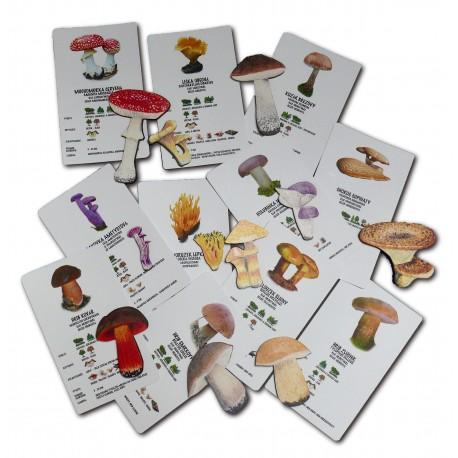 Poznáváme přírodu - houby