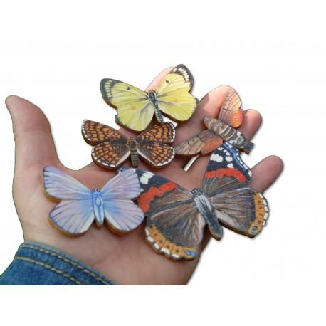 Poznáváme přírodu - Motýli